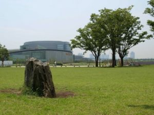 豊洲公園芝生